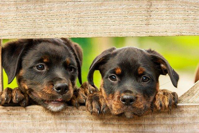 Cibo biologico per cani: marche, proprietà e dove comprarlo
