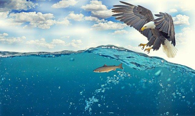 Consumo sostenibile: quali pesci mangiare secondo WWF e Greenpeace