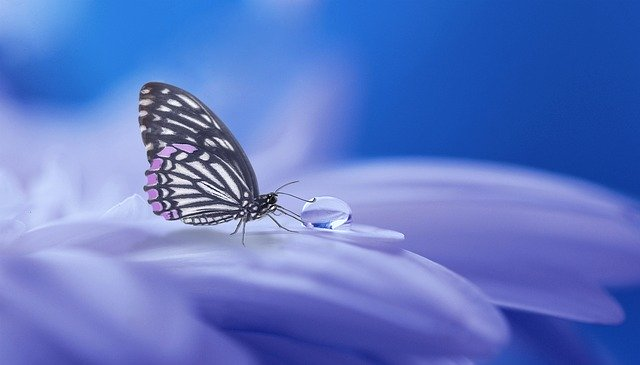 Il ciclo biologico della farfalla