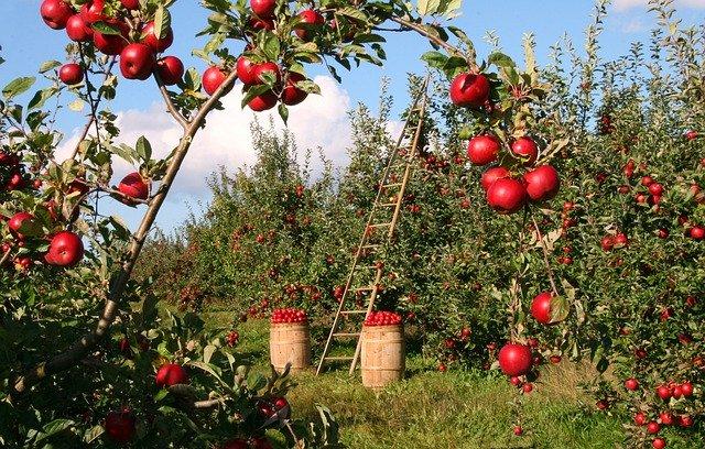 Agricoltura biologica: perché è importante sostenerla?