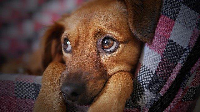 Carni biologiche in scatola per cani: info e prodotti