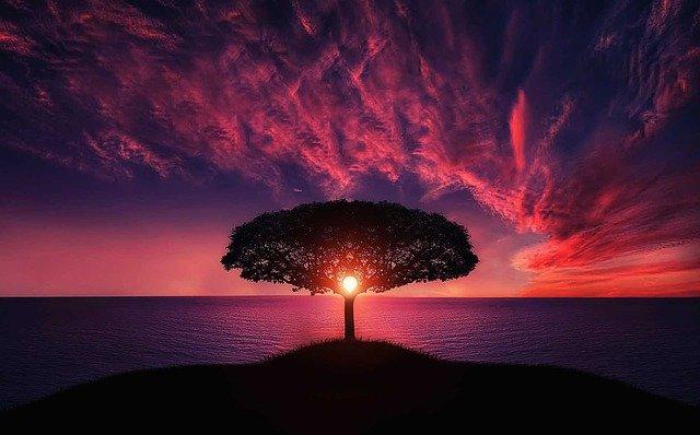 La sepoltura bio: Ecco come diventare un albero